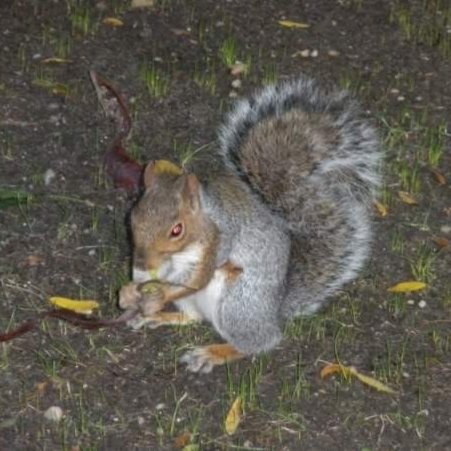 Alt text New York