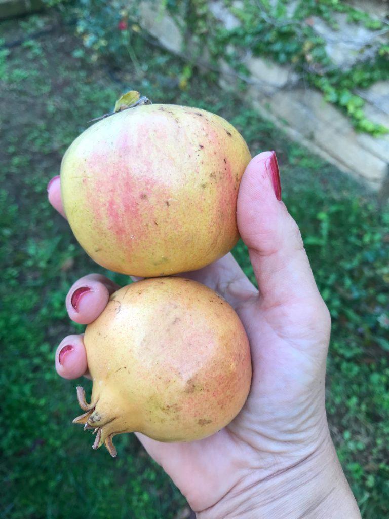 alt tag frutta e verdura