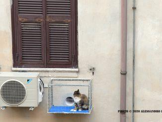 alt tag gatto al fresco