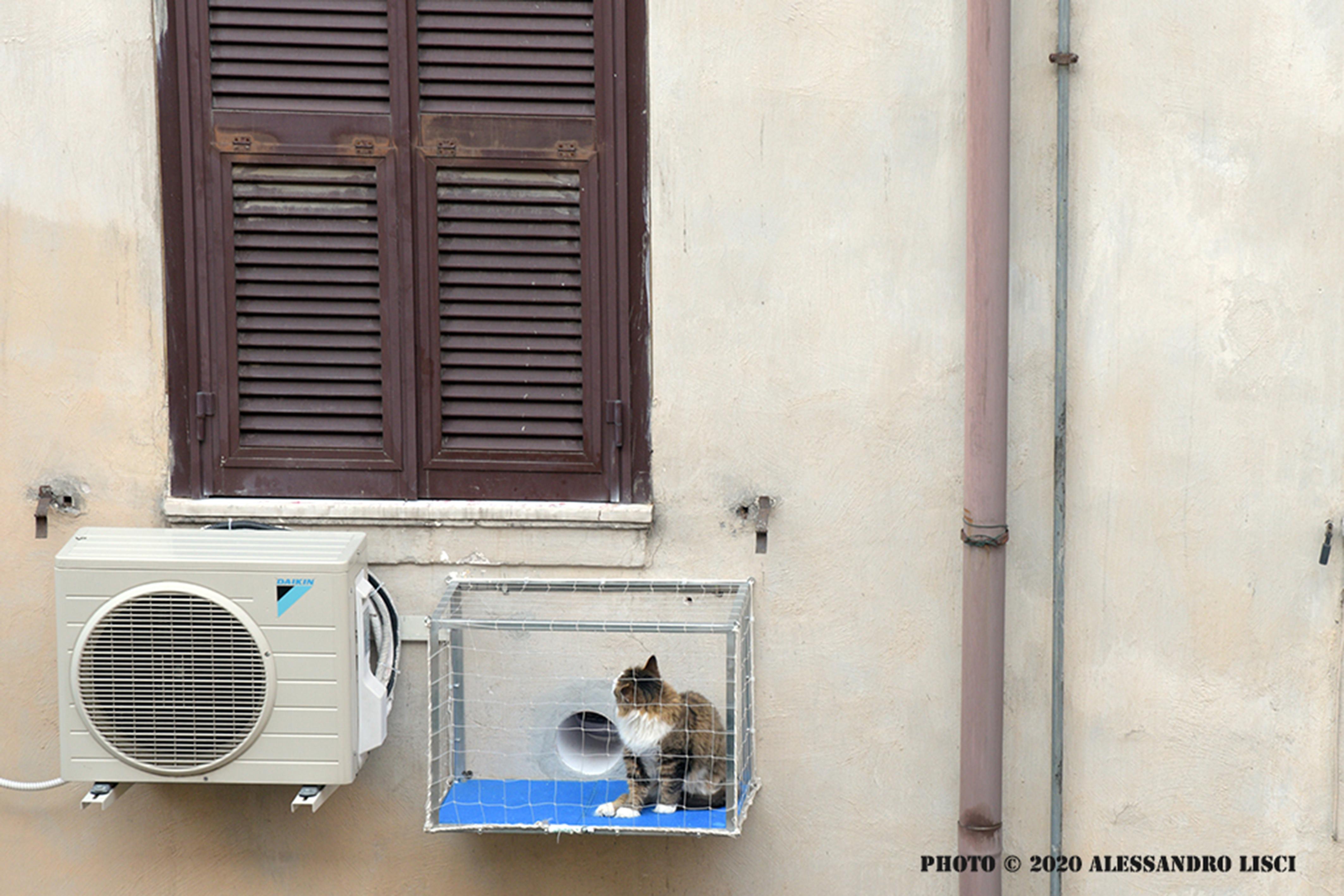 Rete Per Gatti Condominio la miaologgetta per il gatto al fresco